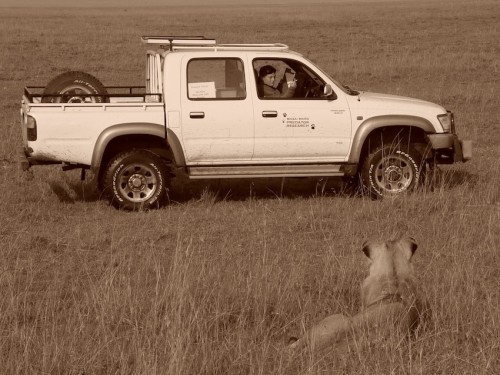 Collecting data on lions in the Maara in 2005.