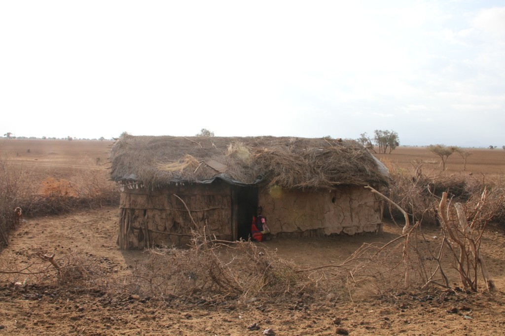 An enkaji (Maasai house) surrounded by a boma (livestock enclosure) made of thorn tree branches.
